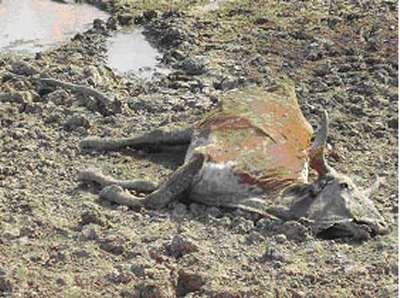 Lluvias son insuficientes para el campo coahuilense