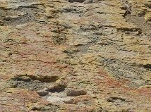 Es Rincón Colorado la primera zona paleontológica oficial en México