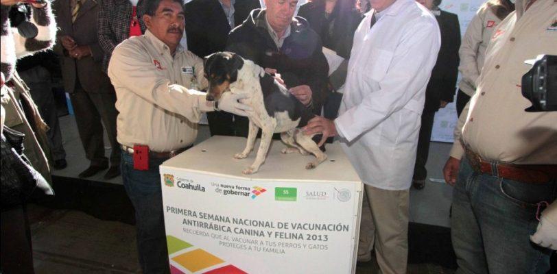 Arranca semana de vacunación antirrábica en Coahuila