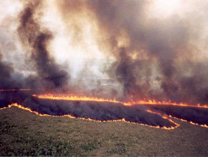 NACIONAL/ Incendios en Valles, SLP, controlados en 80%, asegura Gobernación