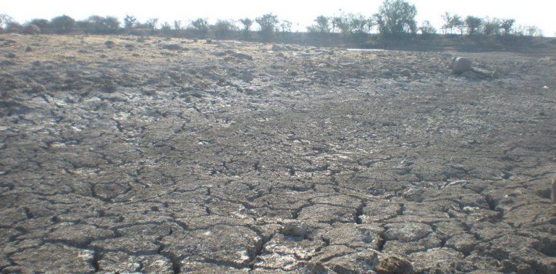 Reportan estragos por intensa sequía en San Pedro