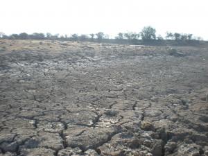 Aumentan estragos por intensa sequía en San Pedro