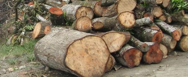 Continúa tala ilegal en sierras de Coahuila