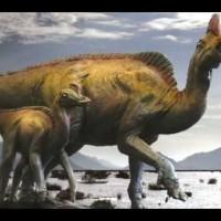 """""""velafrons coahuilensis"""" Hadrosaurio pico de pato con cresta"""