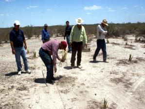 Coahuila 1°er lugar a nivel nacional en plantar candelilla y lechuguilla