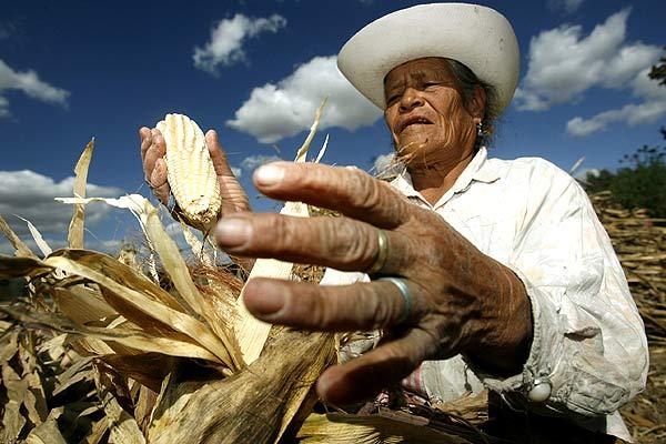 Sufren campesinos calvario burocrático para obtener apoyos