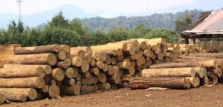 Sexenio de EPN tiene la meta de duplicar la producción maderera