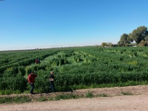 campos matamoros