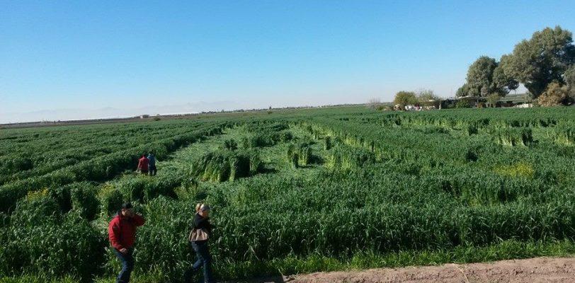 Inexplicables figuras aparecen en campos agrícolas de Matamoros