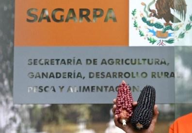 Actuará Sagarpa sobre acoso sexual hasta resolver investigación