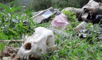 Denuncian a cinco particulares por daño a Sierra de Zapalinamé