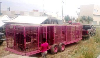 "Retiran animales de ""Italian Circus"" en Torreón"