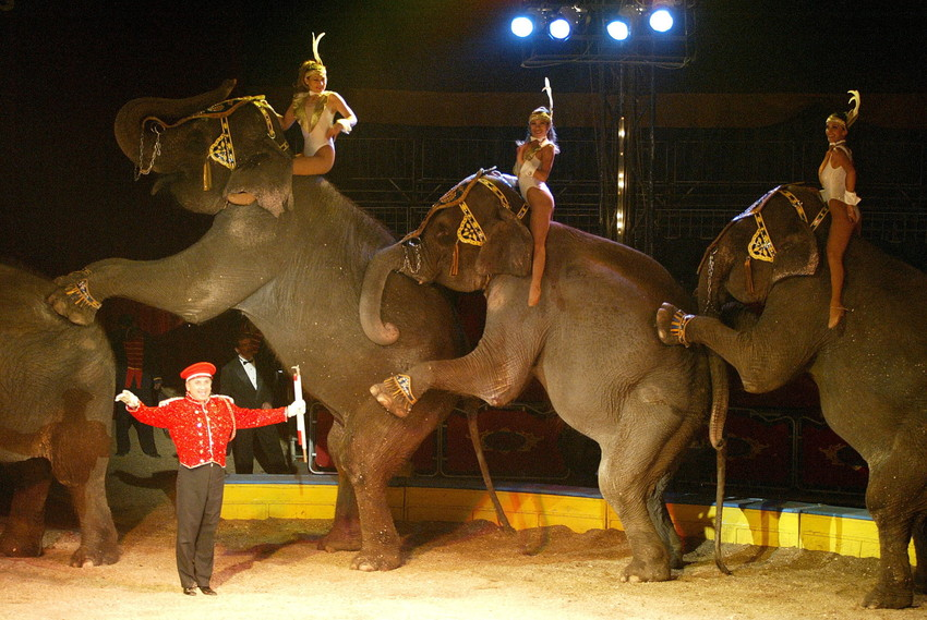 Coahuila con 2 mil 500 ejemplares de circo