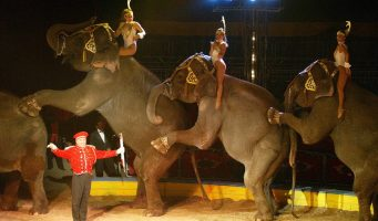 Será Coahuila santuario para animales de circos
