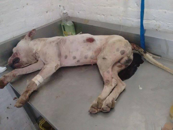 Investiga PGJE muerte de un perro en Torreón tras denuncia en redes sociales