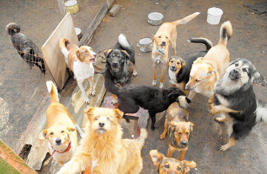 Adoptan a perros callejeros, los salvan de ser sacrificados