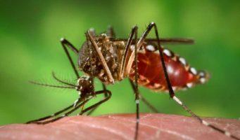 Secretaría de Salud intensifica acciones contra el chikungunya