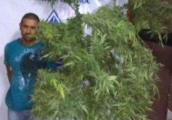 En Matamoros detienen a peatón con planta de mariguana