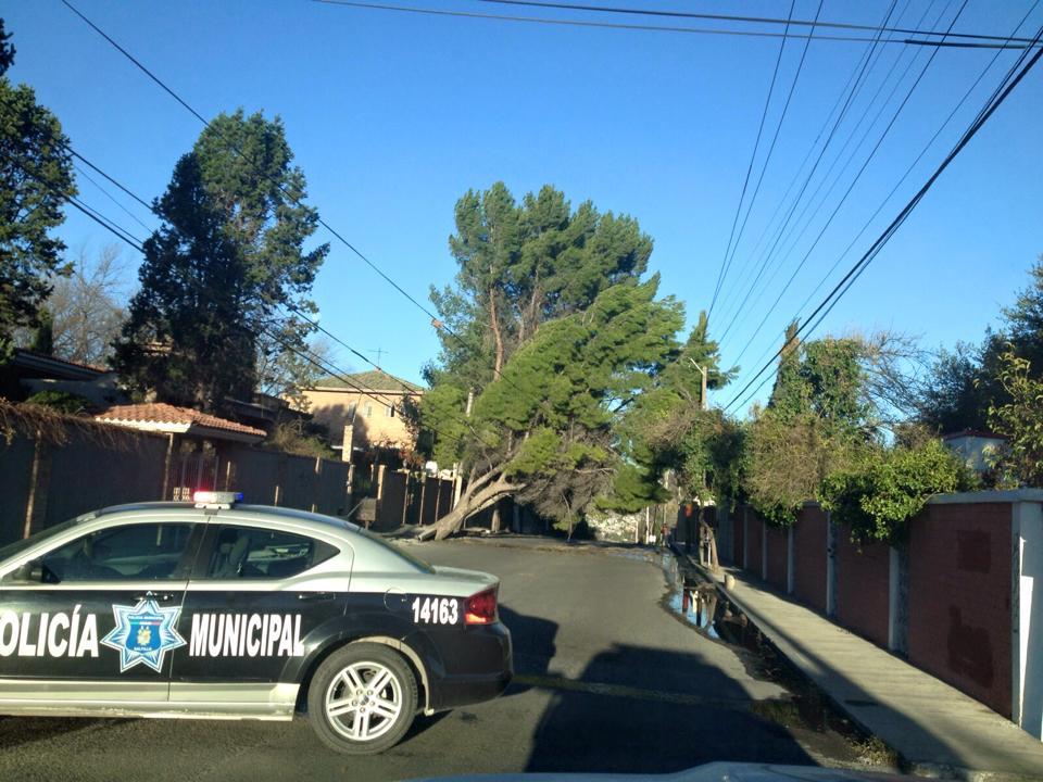 Registran en Saltillo 142 árboles caídos por fuertes vientos