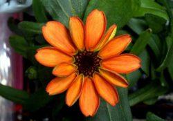Difunde astronauta  imagen de la primera flor germinada en el espacio