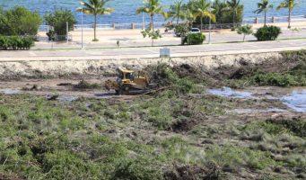 Responsabiliza empresario a FONATUR del diseño y comercialización del manglar de Tajamar