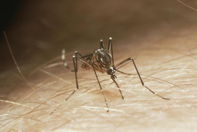 Chile y Canadá estarán libres de la amenaza directa del virus del Zika