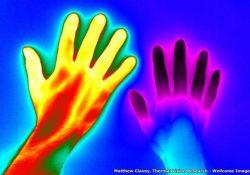 Extraordinarias imágenes de ciencia finalistas del premio Wellcome