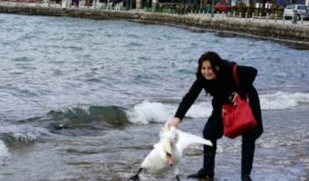 Enfurecen usuarios de redes por muerte de cisne tras una selfie