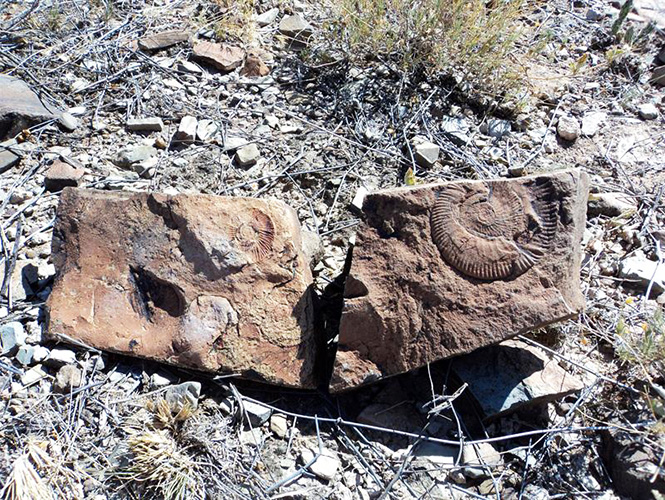 Descubren fósil de hidrosaurio de 70 millones de años en Chihuahua