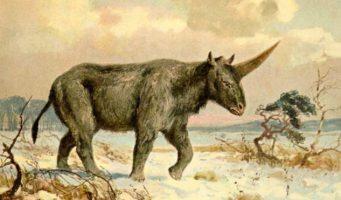 Encuentran evidencia de la existencia de unicornios