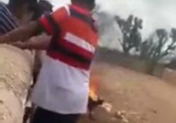 Prenden fuego a perro, lo graban y lo suben a redes sociales