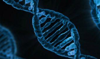Genes predecirían edad de la primera experiencia sexual: estudio