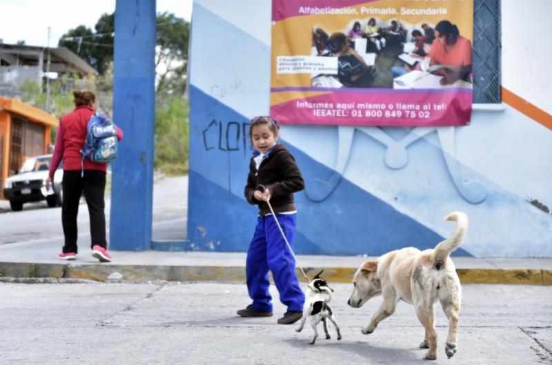 Vacunarán a mascotas del 28 al 31 de marzo en Saltillo