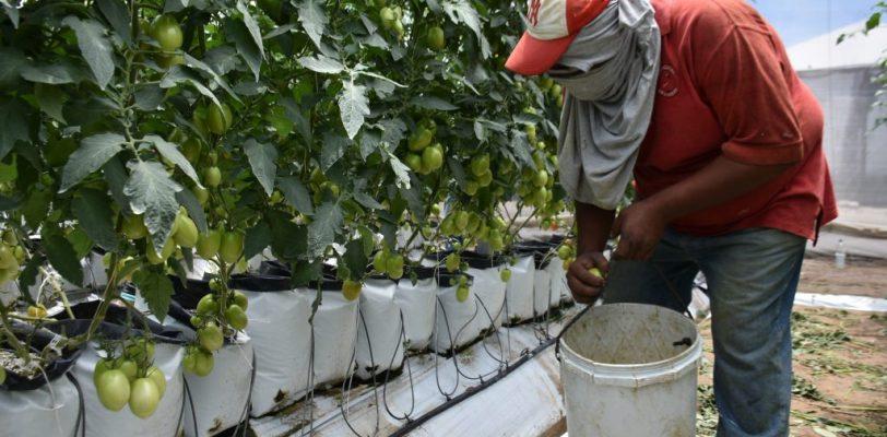 Incorpora SEDESOL a jornaleros agrícolas de Parras