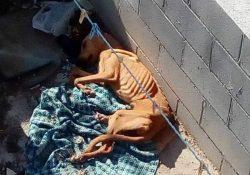 Rescatan vecinos y policía ambiental mascota en abandono