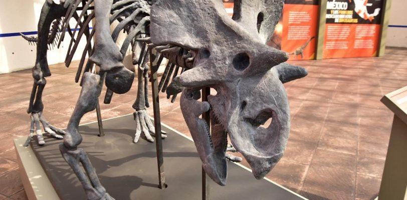Inicia exposición de riqueza paleontológica de Coahuila