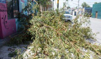 Lluvias y fuertes vientos dejan daños en Monclova