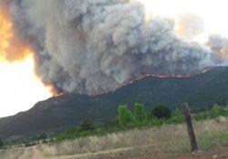 Suman 600 hectáreas afectadas por incendio forestal en Arteaga