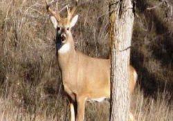 Inicia temporada Cinegética en unidades de manejo para la conservación de la vida silvestre