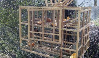 Libera Policía Ambiental ave capturada de forma ilegal