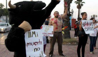 Desconoce Morena iniciativa a favor de la tauromaquia