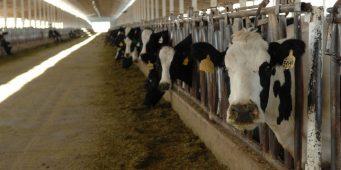 Una ocurrencia de AMLO reubicar industria lechera lagunera: diputado