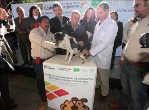 Arrancan campaña antirrábica en Coahuila