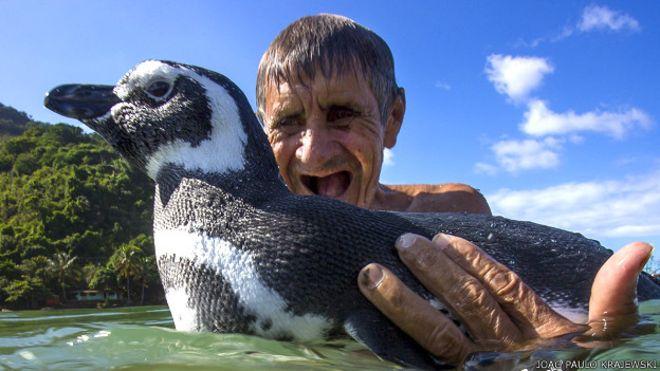 La verdadera historia de DinDim, el pingüino viral de internet