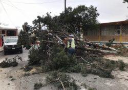 Derriban fuertes vientos 66 árboles en Saltillo