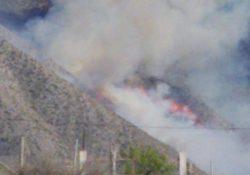 Consume 400 hectáreas incendio forestal en ejido Las Hormigas
