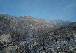 Brigadistas de Coahuila liquidan 2 incendios en la sierra de Arteaga