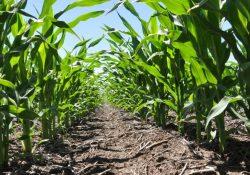 AMLO tiene abandonado al campo: Congreso Agrario