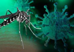 Reportan el primer caso de un paciente con Covid y dengue en Coahuila