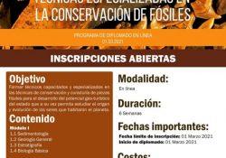 Invita el CIGA de la UAdeC al Diplomado en Técnicas Especializadas en la Conservación de Fósiles